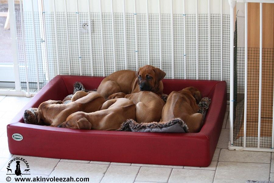 gemeinsam kuscheln und schlafen