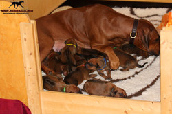 Jumay Babies 25.11.16o