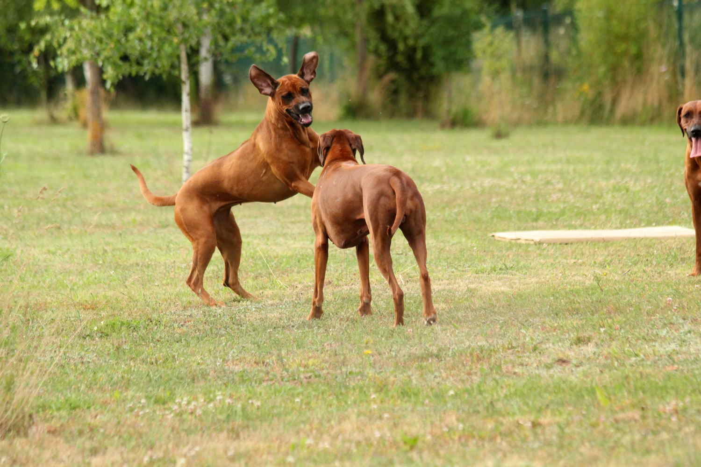 Hunde Juli12