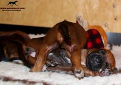 Jumay Babies 25.11.16e