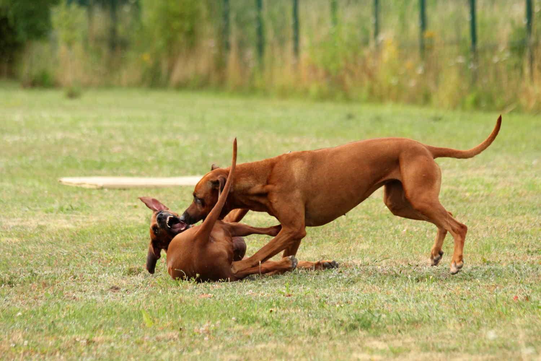 Hunde Juli3
