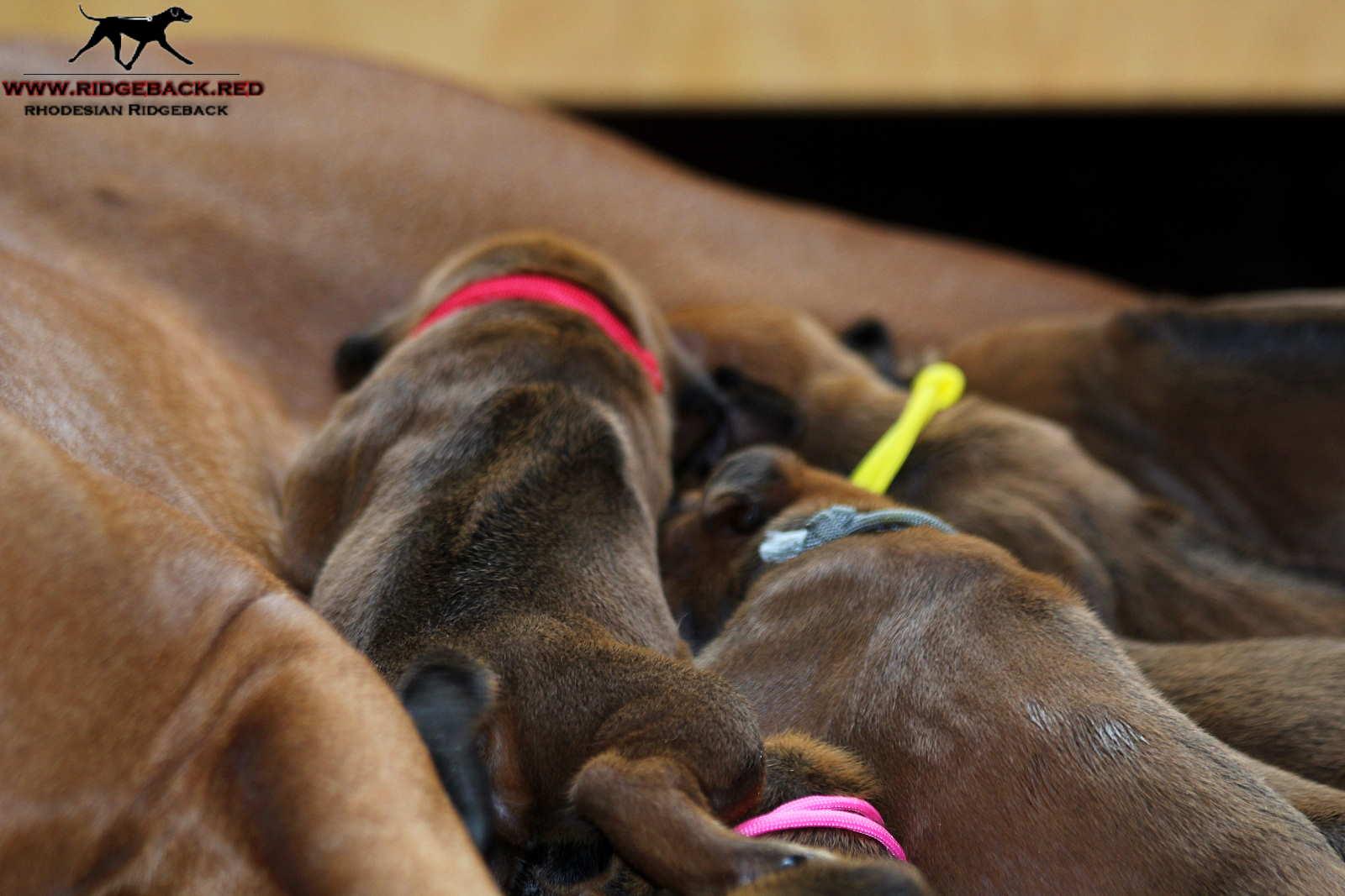 Jumay Babies 27.11.16_15