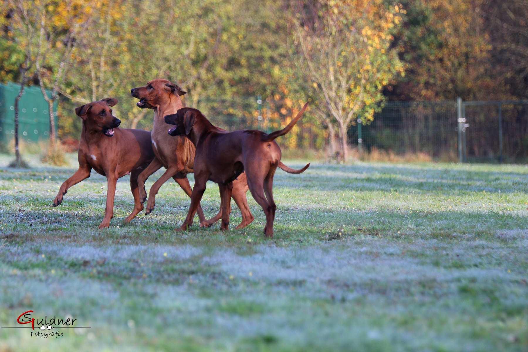 Hunde 18.10.17_r