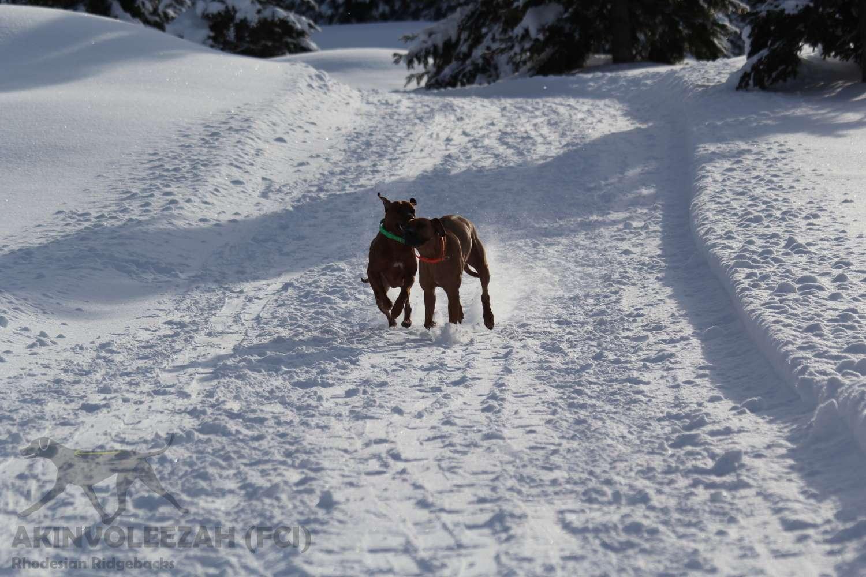Maari Moyo Akinvoleezah Skiurlaub 2015 Guldner 23.jpg