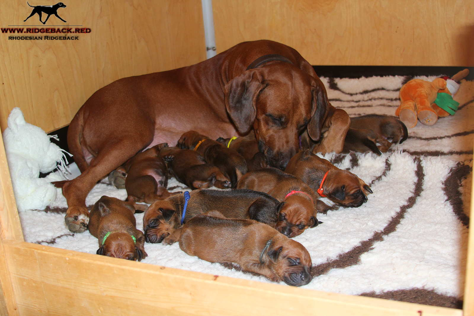 Jumay Babies 25.11.16r