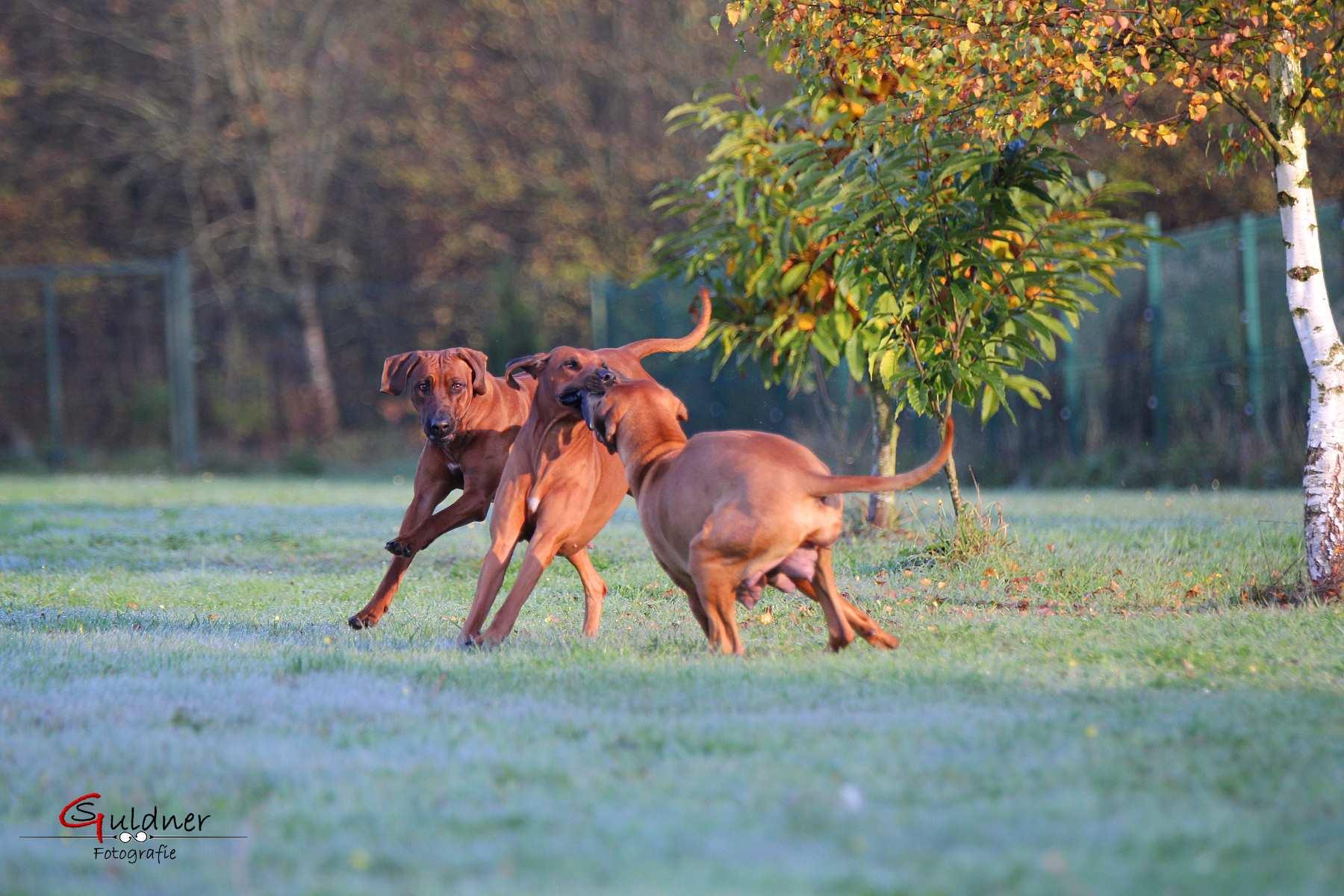 Hunde 18.10.17_k