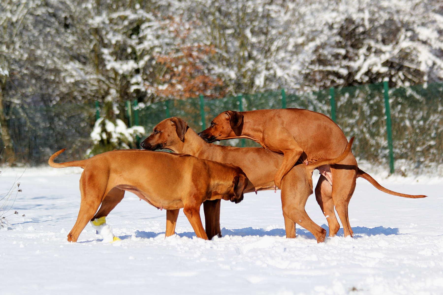 Hunde Garten 31.01.2019_0014