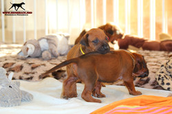 Jumay Babys 08.12.16_16