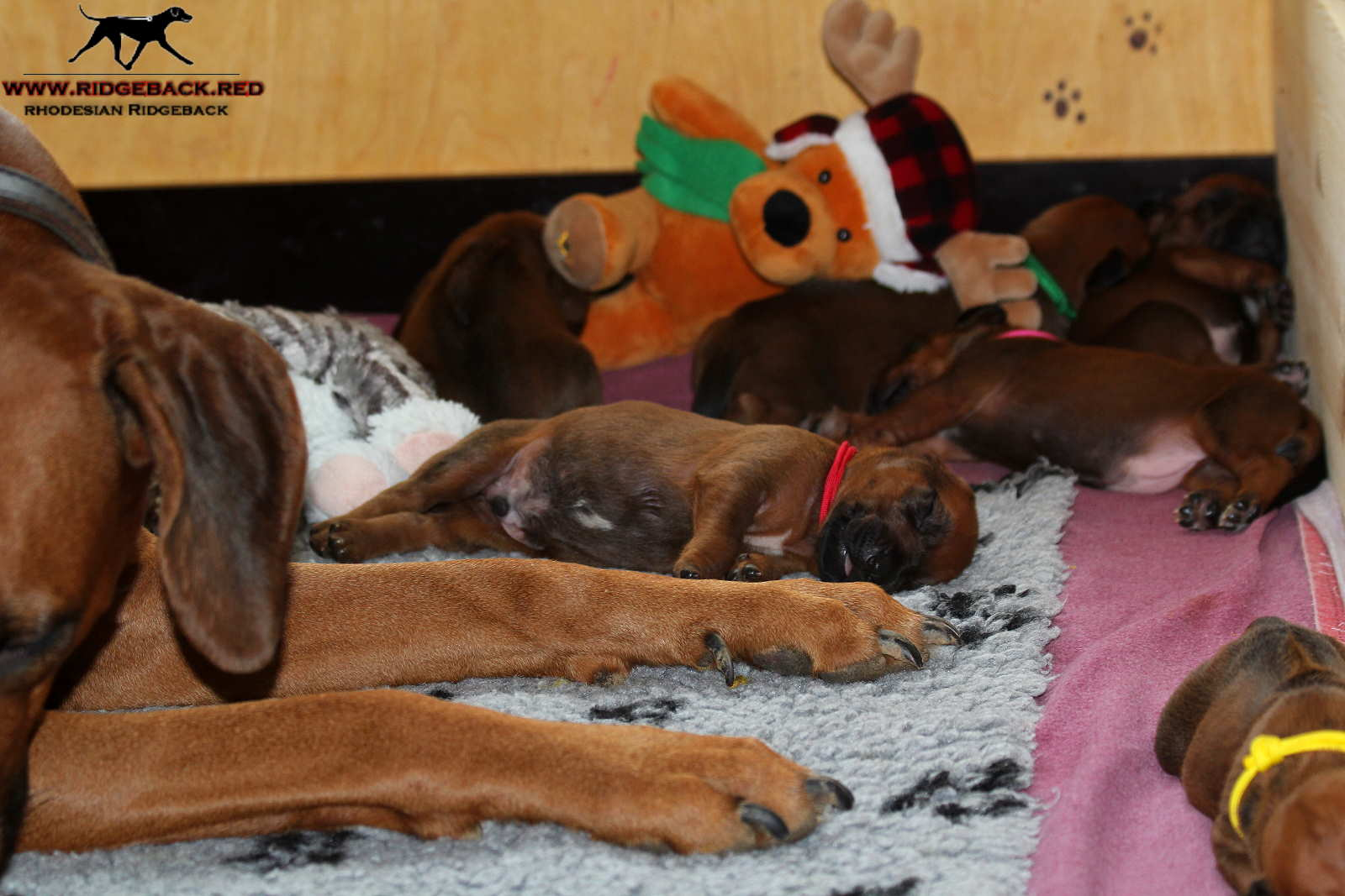 Jumay Babies 27.11.16_4