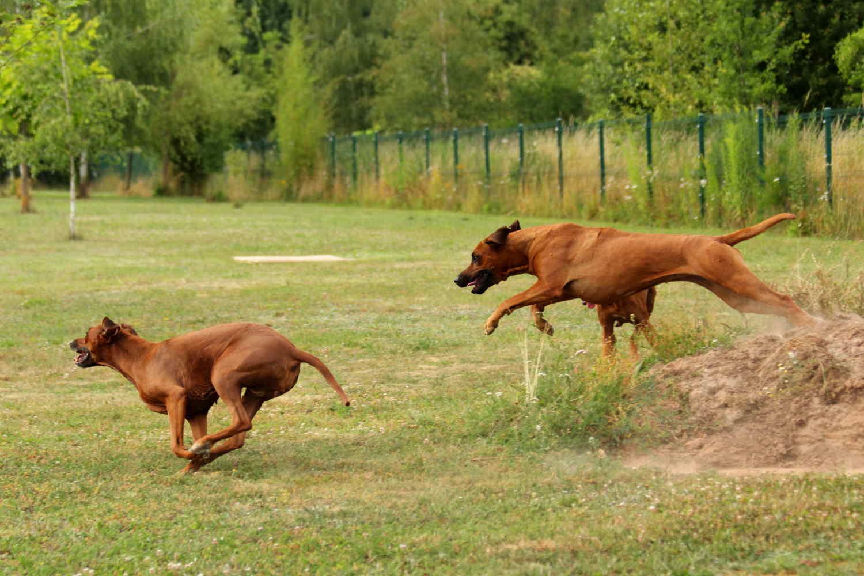 Hunde Juli5
