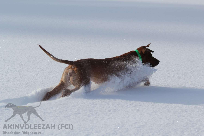 Maari Akinvoleezah Skiurlaub 2015 Januar Corvara 2.jpg