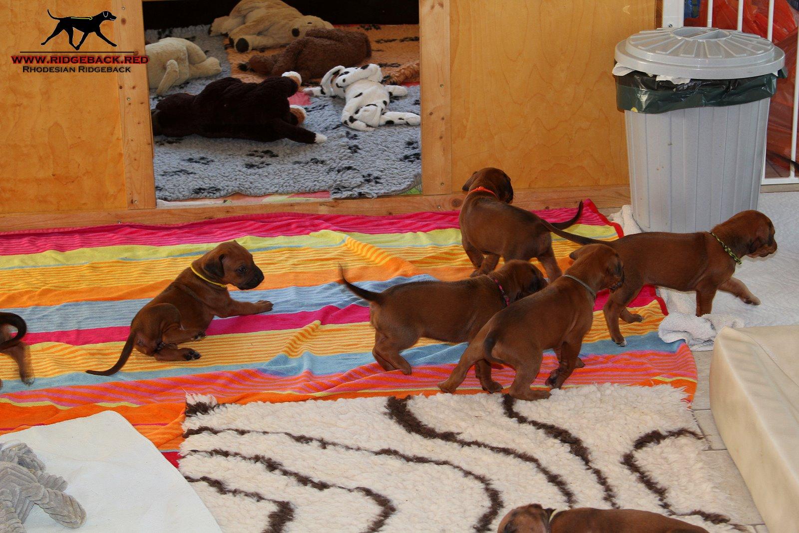 Jumay Babys 08.12.16_1