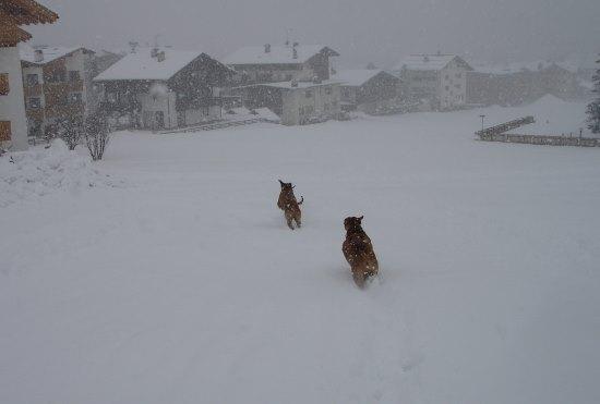 Ridgeback_Winter_10.JPG