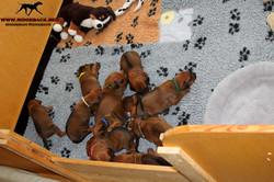 Jumay Babies 03.12.16_20