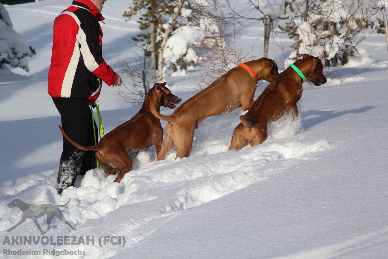 Akinvoleezah Skiurlaub 2015 Guldner 31.jpg