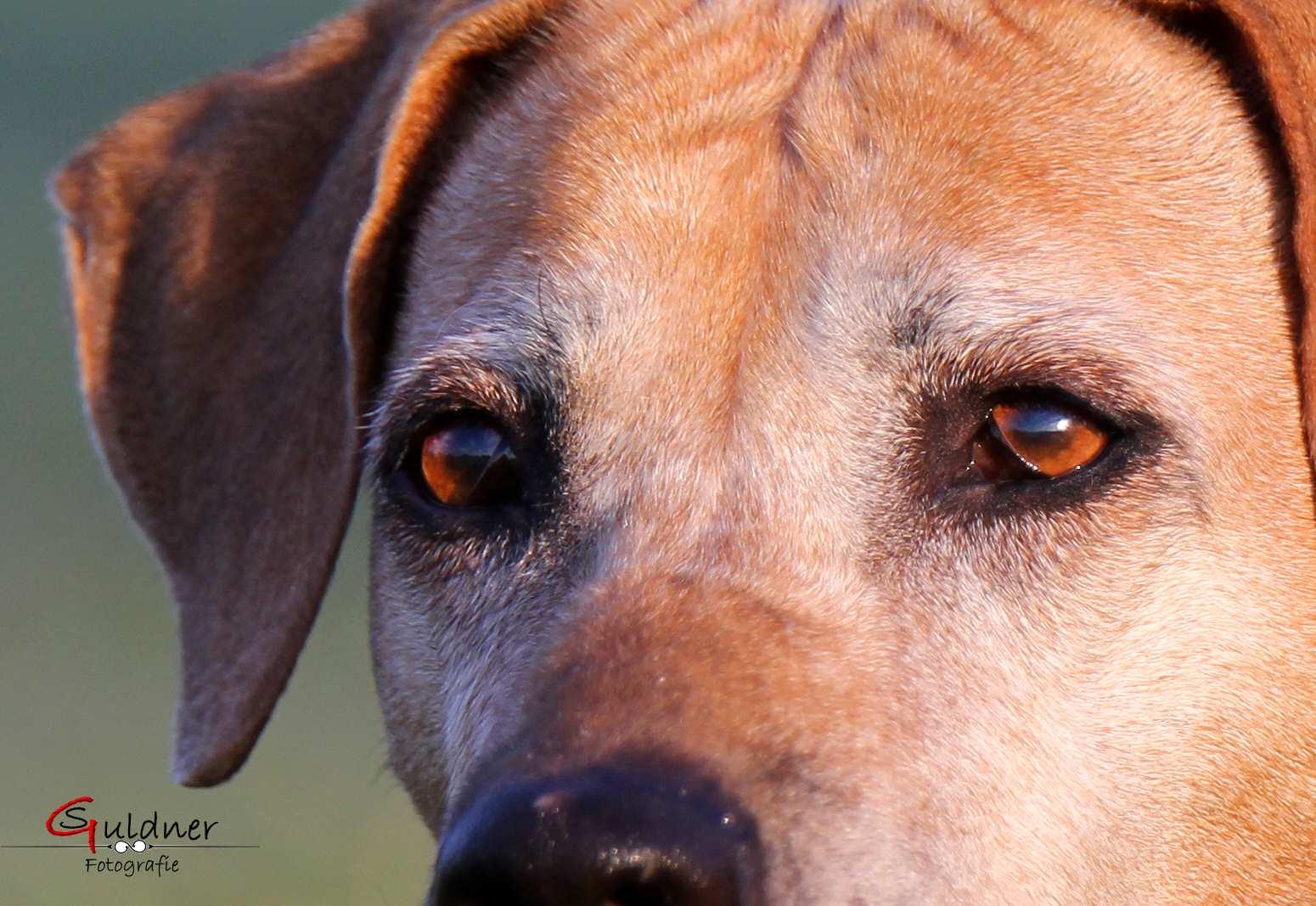 Hunde 18.10.17_h