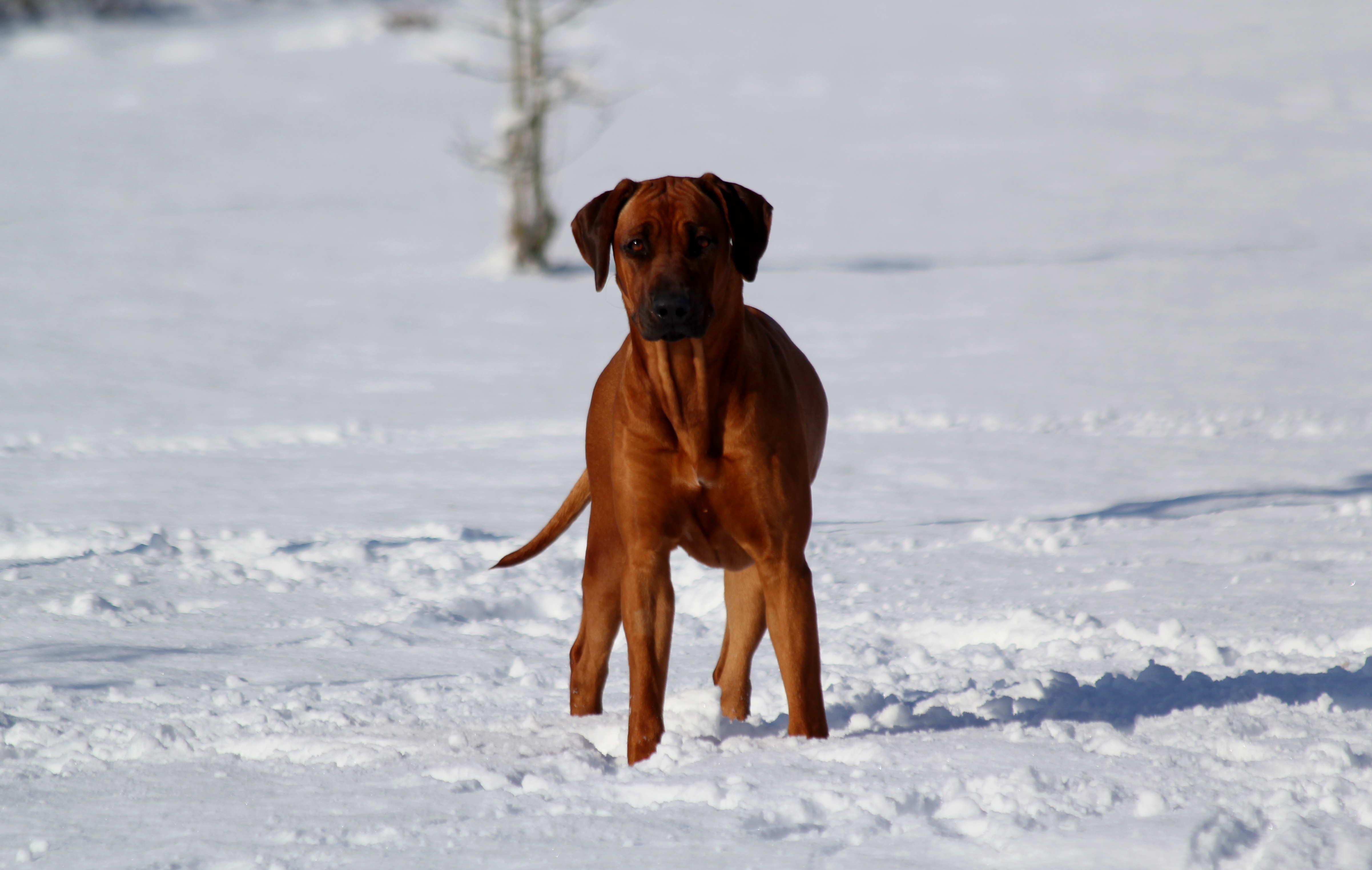 Hunde Garten 31.01.2019_0020