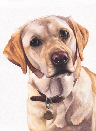 Yellow Labrador in Watercolour