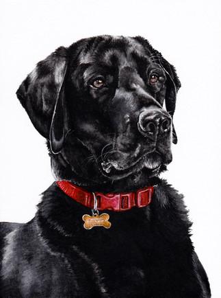 Black Labrador in Watercolour