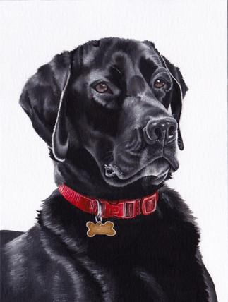 Black Labrador in Oil