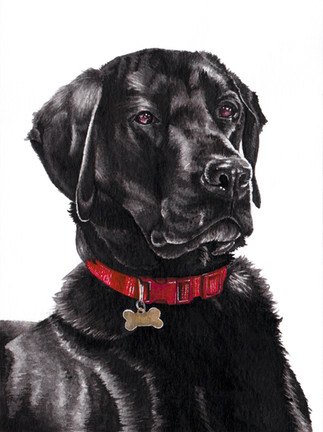 Black Labrador in Ink