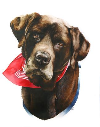 Chocolate Labrador in Watercolour