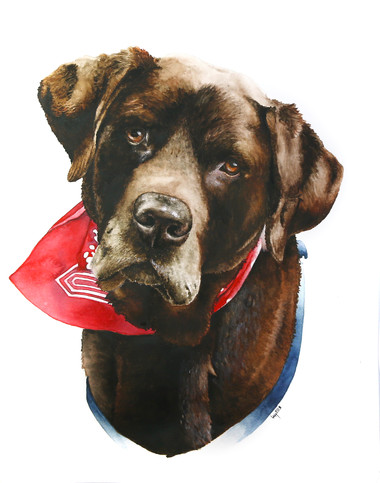 Chocolate Labrador in Watercolour