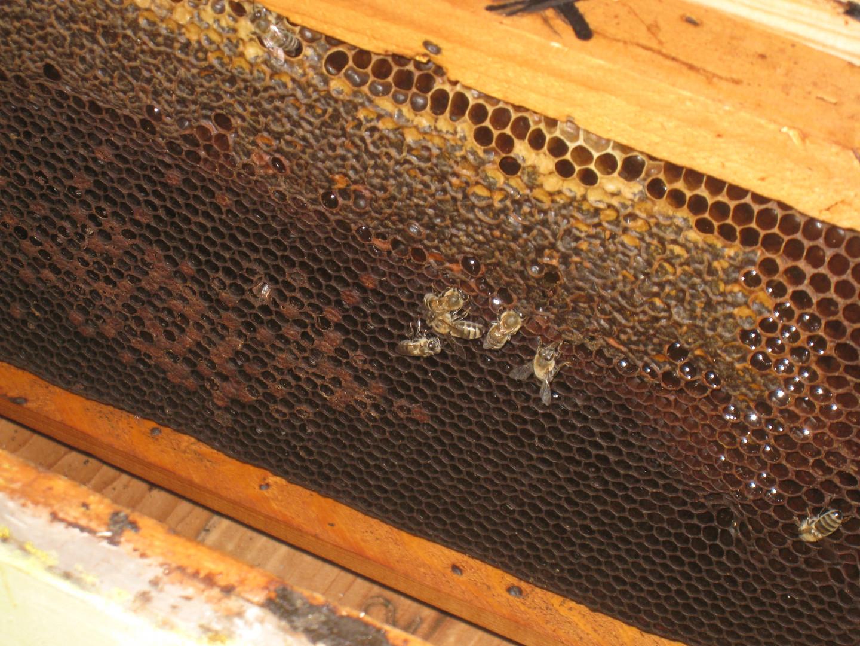 Nos abeilles, produits bio, Crète