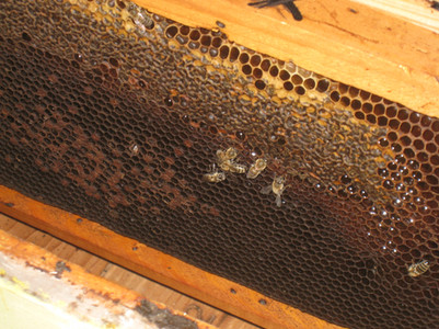 The bees from Kalyvitis