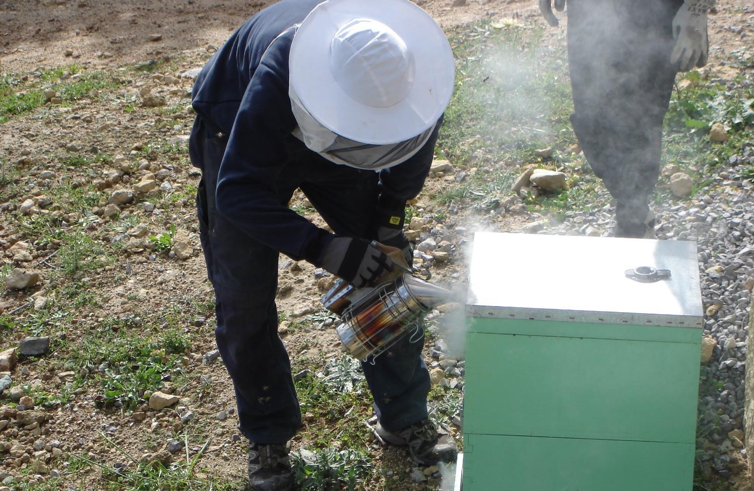 Les abeilles, produits bio, Crète