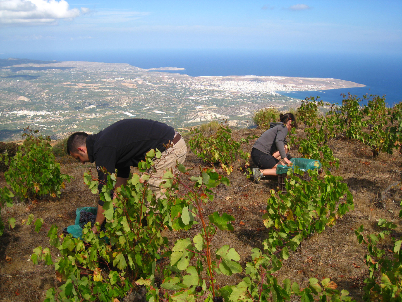 Notre vin bio, produits bio, Crète