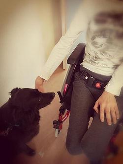 Médiation animale chien