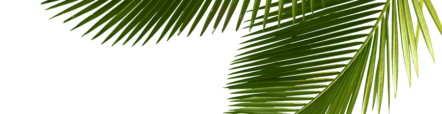 belize-rainforest-retreat-reviews-section-bg-palm-leaves-resize-web.png