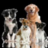 Dog Kennel Dixon Missouri