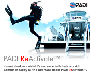 ReActivate PADI Dive Course St. Thomas US VI