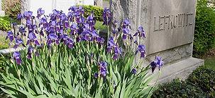 Headstone Iris-min.jpg