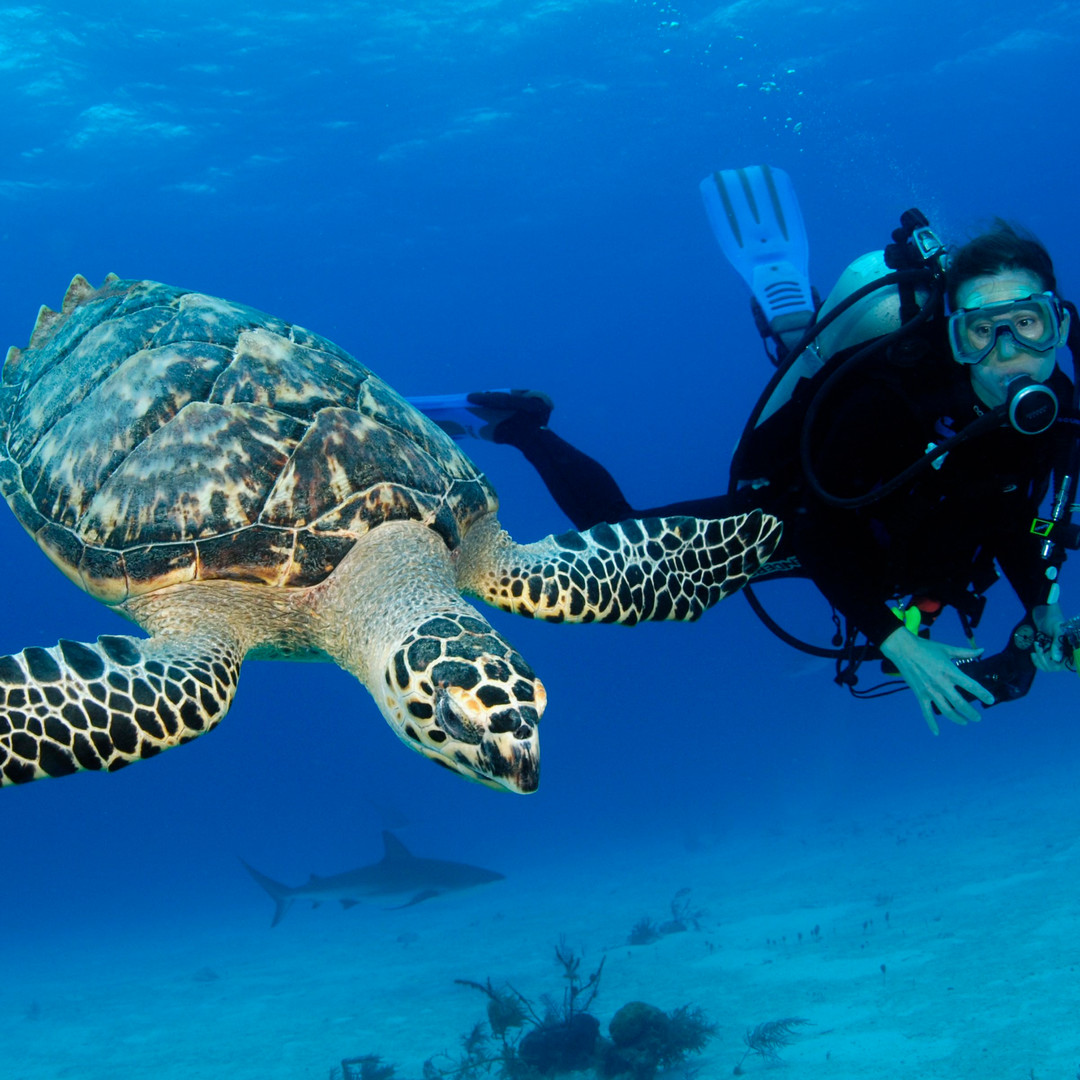 Stuart-Cove-Scuba-Diving-Bahamas-3.jpg