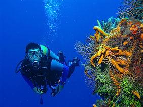 Scuba Diving St. Thomas Virgin Islands