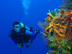 Scuba Diving St. Thomas Virgin Islands