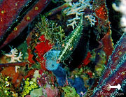 Scuba Diving in Virgin Islands