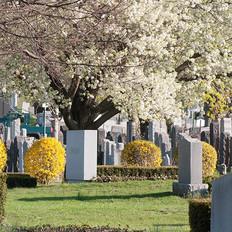Trees Bushes Spring Blossoms-min.jpg