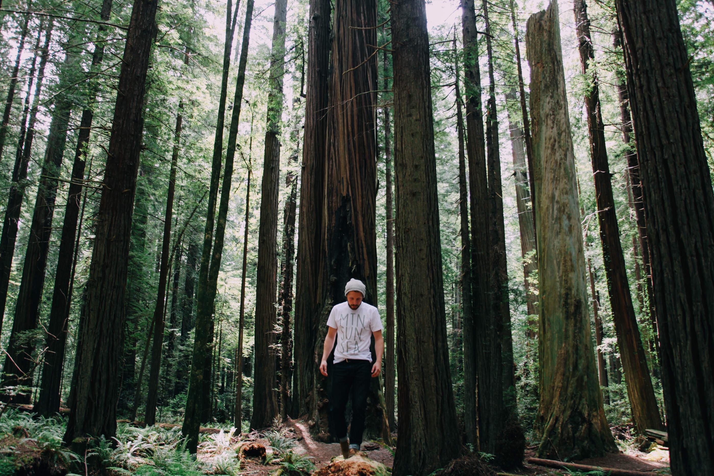 hiking-in-the-redwoods_t20_wKdegW (1)
