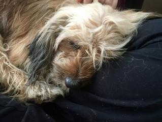 LOST DOG FOUND BY SPIRIT AND MEDIUM MARI