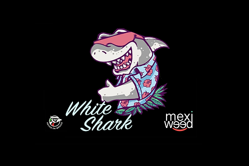 White Shark Pack 10 Semillas