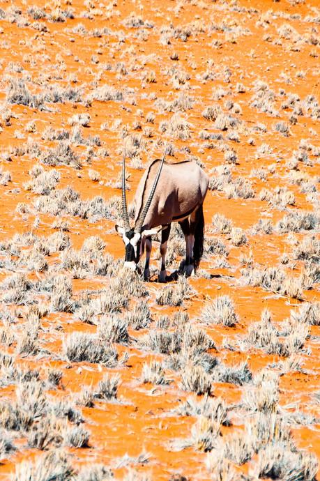 YG_Namibia-24.jpg