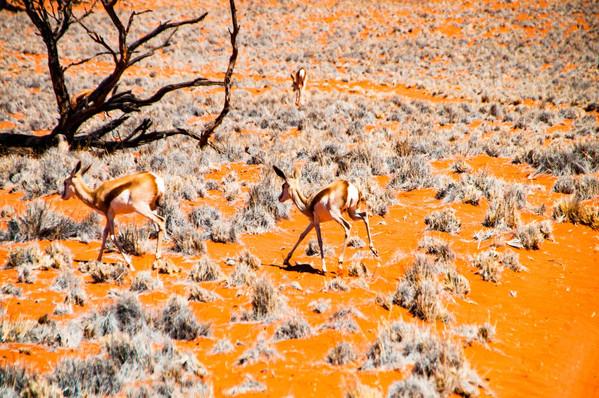 YG_Namibia-51.jpg