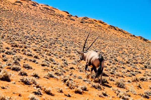 YG_Namibia-80.jpg