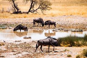 YG_Namibia-871.jpg