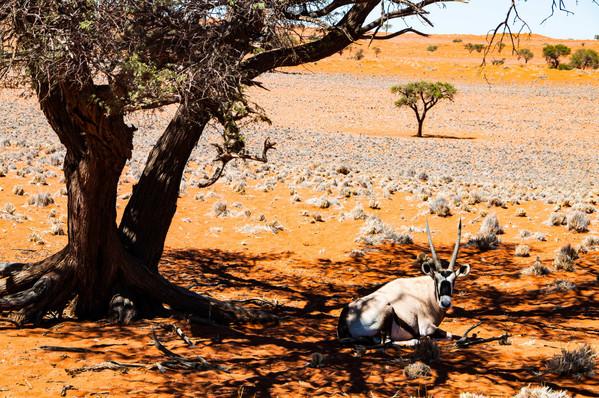 YG_Namibia-46.jpg