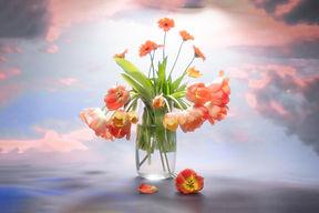 YG_CLOUD_Tulips-9.jpg
